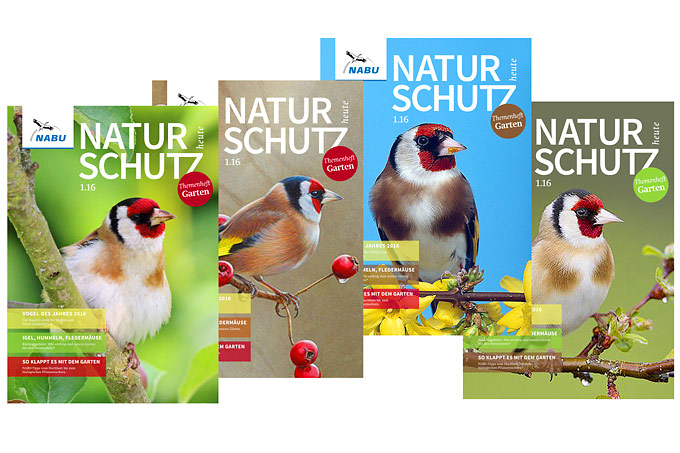"Coverentwürfe für ""Naturschutz heute"", Ausgabe 1/16 – Titelfotos Stieglitz: Frank Derer, Andrew Hutchinson/Ikon Images/picture alliance, Matthias Schulte/Arco Images/picture alliance und Mark Hamblin/Wildlife/picture alliance"