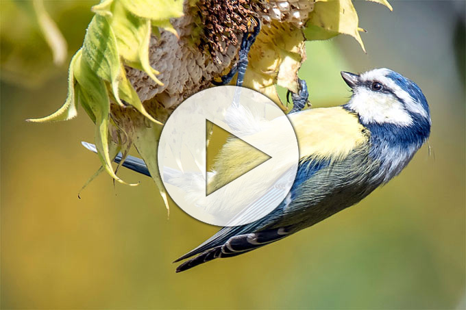 Vögel Im Garten Nabu