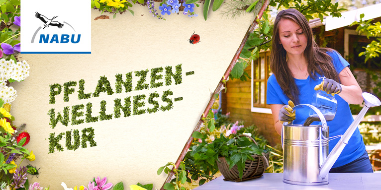 Video Pflanzenwellness
