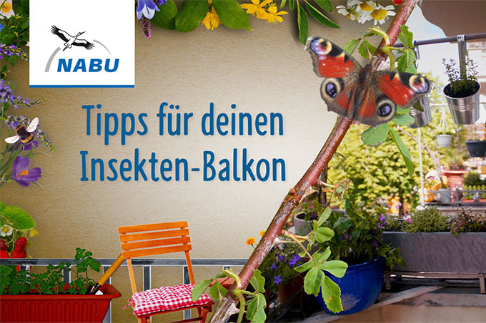 Video Insektenbalkon