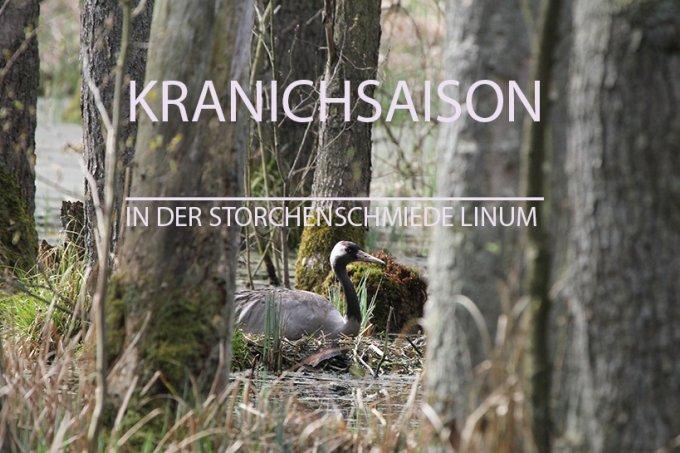 Storchenschmiede Linum: Kranichsaison - NABU Berlin
