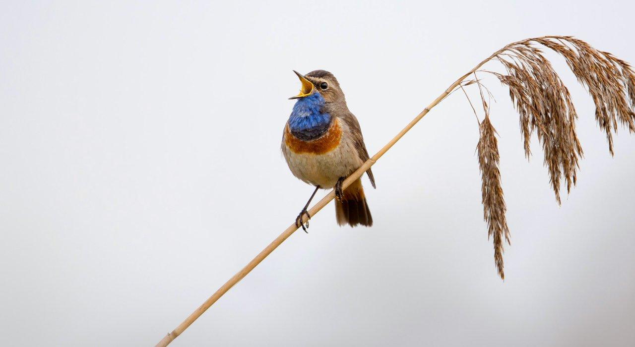 vögel kennenlernen vrm anzeigen kennenlernen