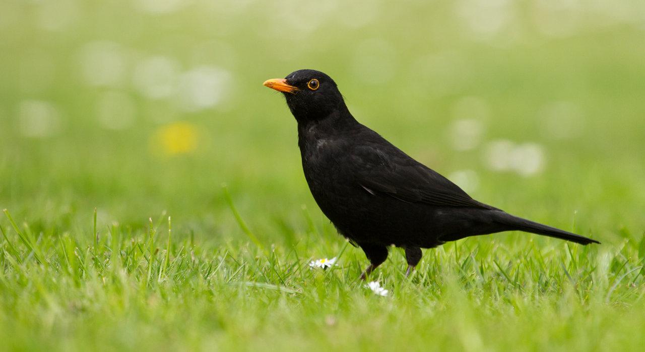 Die 40 Haufigsten Gartenvogel Im Portrat Nabu