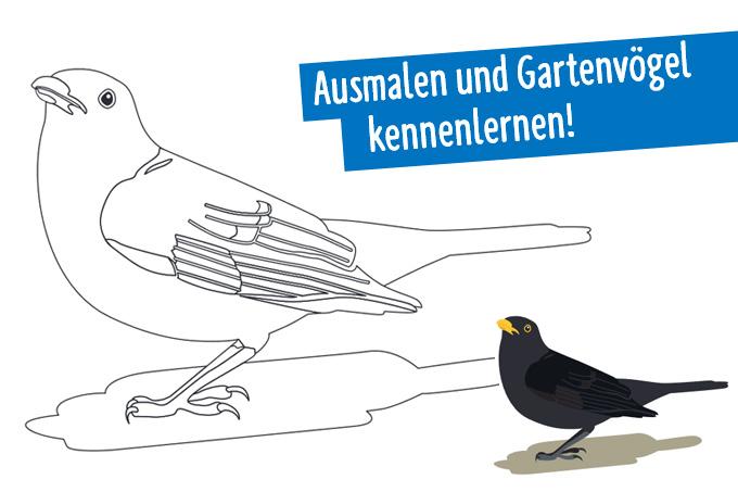 Zehn Vogel Ausmalbilder Nabu