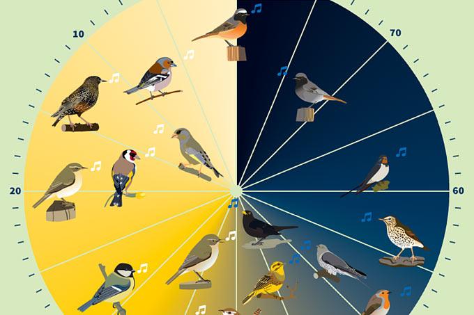 Wann Singt Welcher Vogel