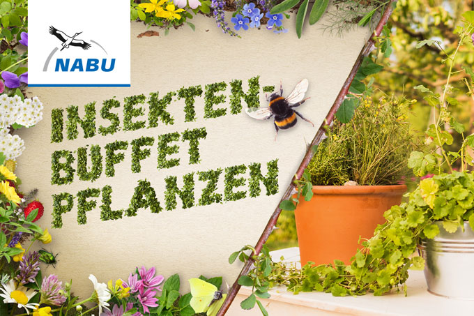 DY-Video Insektenbuffet pflanzen