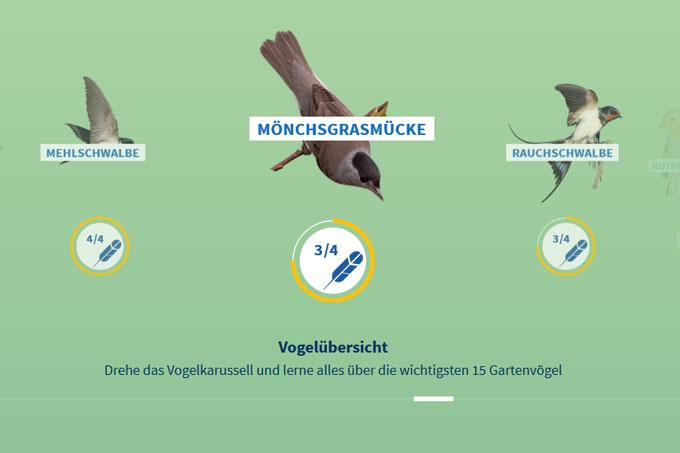 Vögel: Arten kennenlernen und bestimmen : unbekannt: thepalefour.de: BÌcher