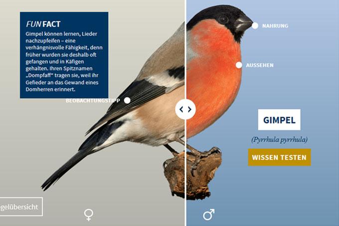 Vogeltrainer - Vogelansicht