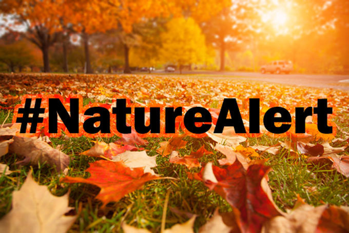 Nature Alert - Foto: BirdLife