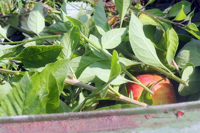 Biomüll Im Sommer Küche : Zera food recycler dieses küchengerät verwandelt biomüll in dünger