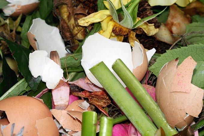 bananenschalen auf kompost