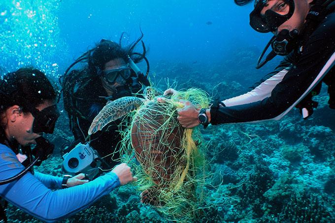 Meeresschutz Wissen