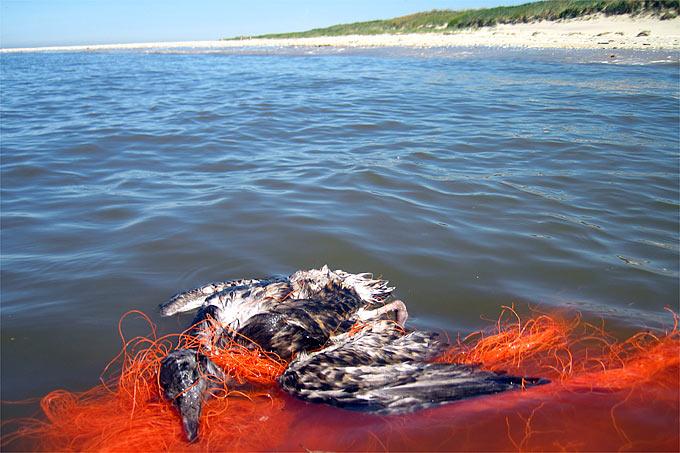 NABUde  Themen  Meeresschutz  Müllkippe Meer  NABU