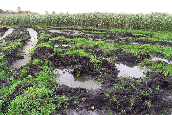 Grünlandumbruch Mais - Foto: Uwe Baumert