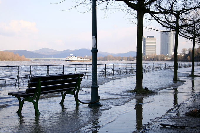 Rheinhochwasser in Bonn - Foto: Helge May
